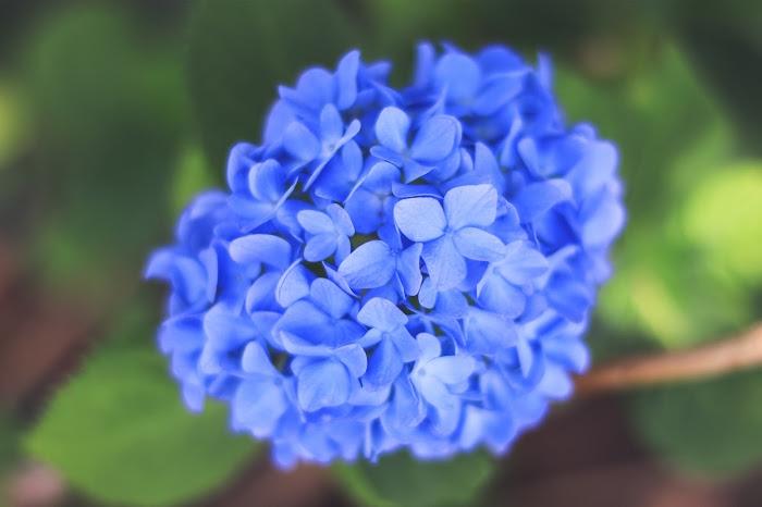 『花』のフリー写真画像[ID:8705]