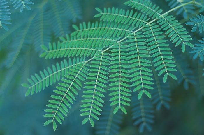『花・植物』のフリー写真画像[ID:9006]