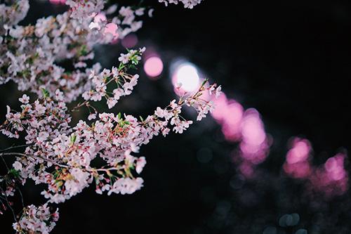 『花・植物』のフリー写真画像[ID:9941]