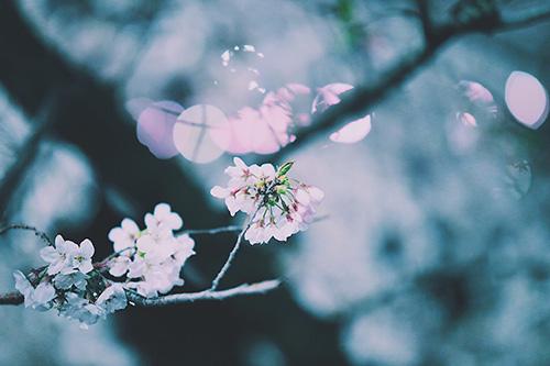 『花・植物』のフリー写真画像[ID:9947]