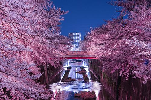 『花』のフリー写真画像[ID:9951]