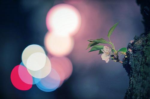 『花』のフリー写真画像[ID:9944]