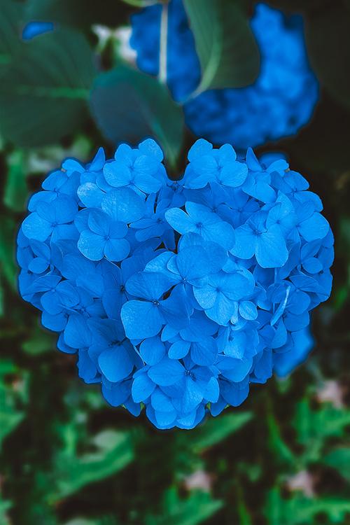『花・植物』のフリー写真画像[ID:10145]